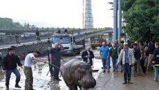 Dzikie zwierzęta na ulicach Tbilisi