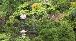 Ogród na wysokiej skarpie   (odc. 547)